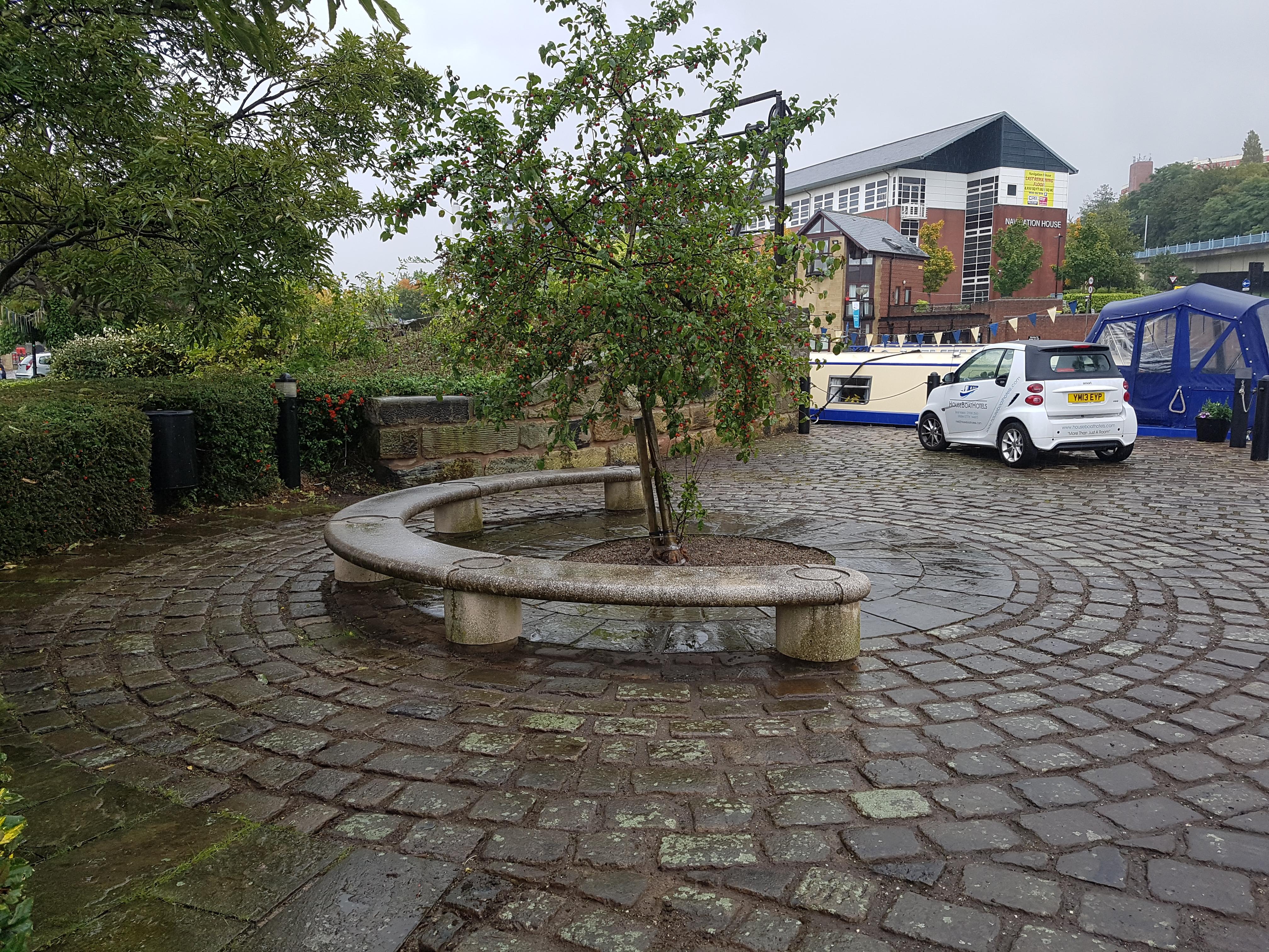 Tree in Victoria Quays
